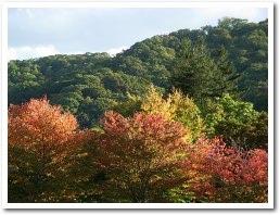 紅葉の奥は,円山の裏側