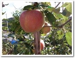 apple080928.jpg