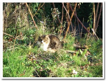 cat071107.jpg