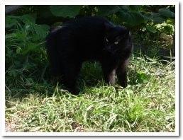 cat080811.jpg
