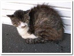 cat081014.jpg