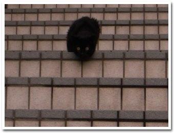 cat090916_1.jpg