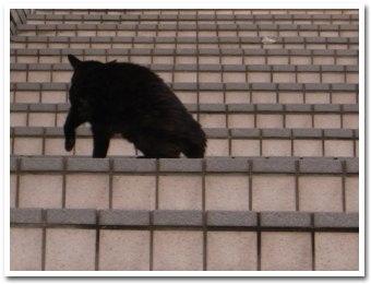 cat090916_2.jpg