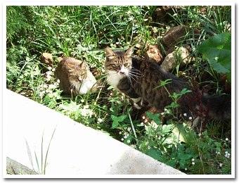 cats070922.jpg