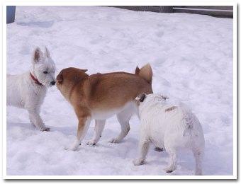 dogs100228.jpg