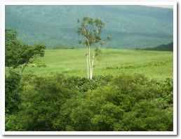 広い牧草地