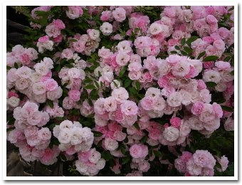 flower080703.jpg