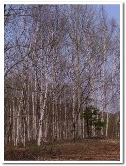 forest090501.jpg