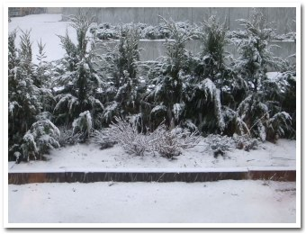 garden090426.jpg