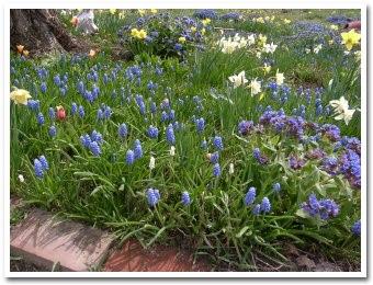 garden090503_1.jpg