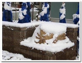 こんなに雪が