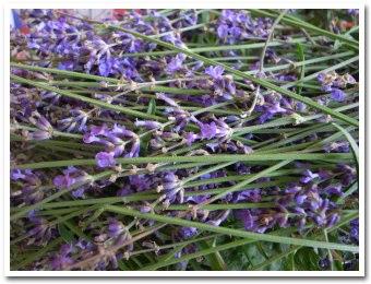 lavender090723.jpg