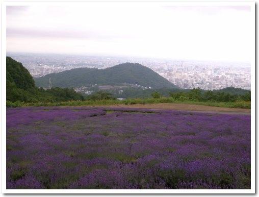 lavendergarden090726.jpg