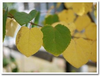 leaves090920.jpg