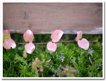 leaves091007.jpg