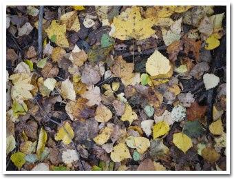 leaves091018.jpg