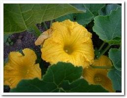 pumpkin080707.jpg