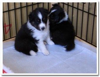 puppy090215_2.jpg