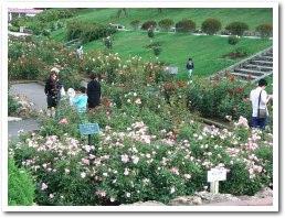 rosegarden070916.jpg