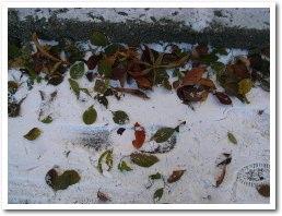 紅葉も雪の下