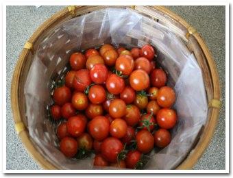 tomato060902.jpg