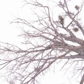 tree080304.jpg