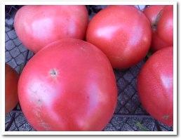 vegetable090912_2.jpg