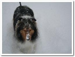 すごい雪です・・・