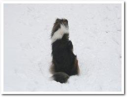 雪はやっぱりいいよ!