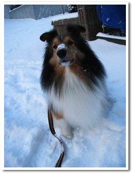 雪はいいね〜