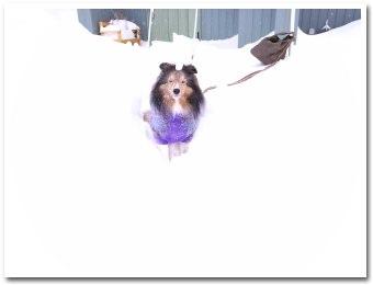 すごい雪ですね〜