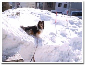雪割り日和だね〜
