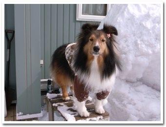 雪遊びさせてくれないの?