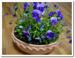 flower040421.jpg