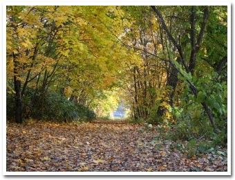 黄金色の小道