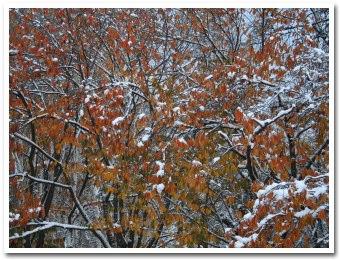 紅葉に雪が