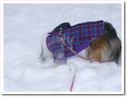 雪って最高〜〜♪