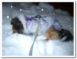 雪が好き,この写真はママが転ぶ前で〜す