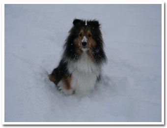 ヴィオラも雪まみれ
