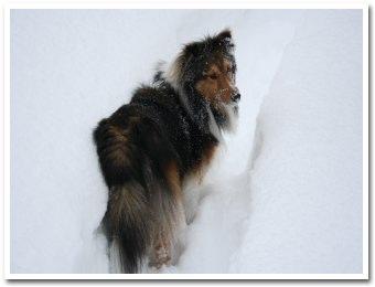 雪が深くてラッセルに・・・